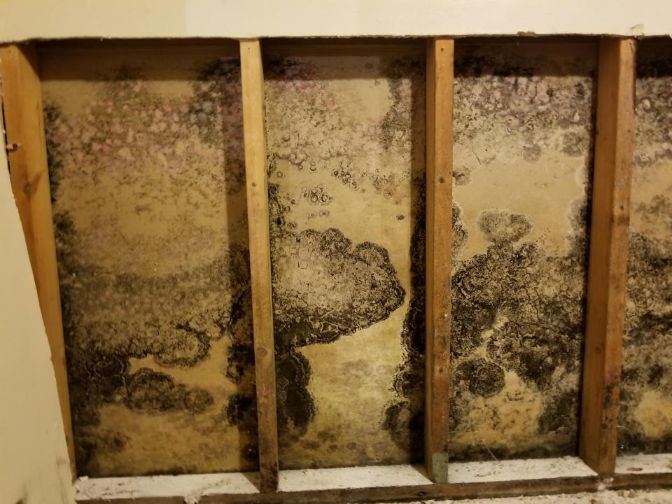 Mold Growing Behind Drywall