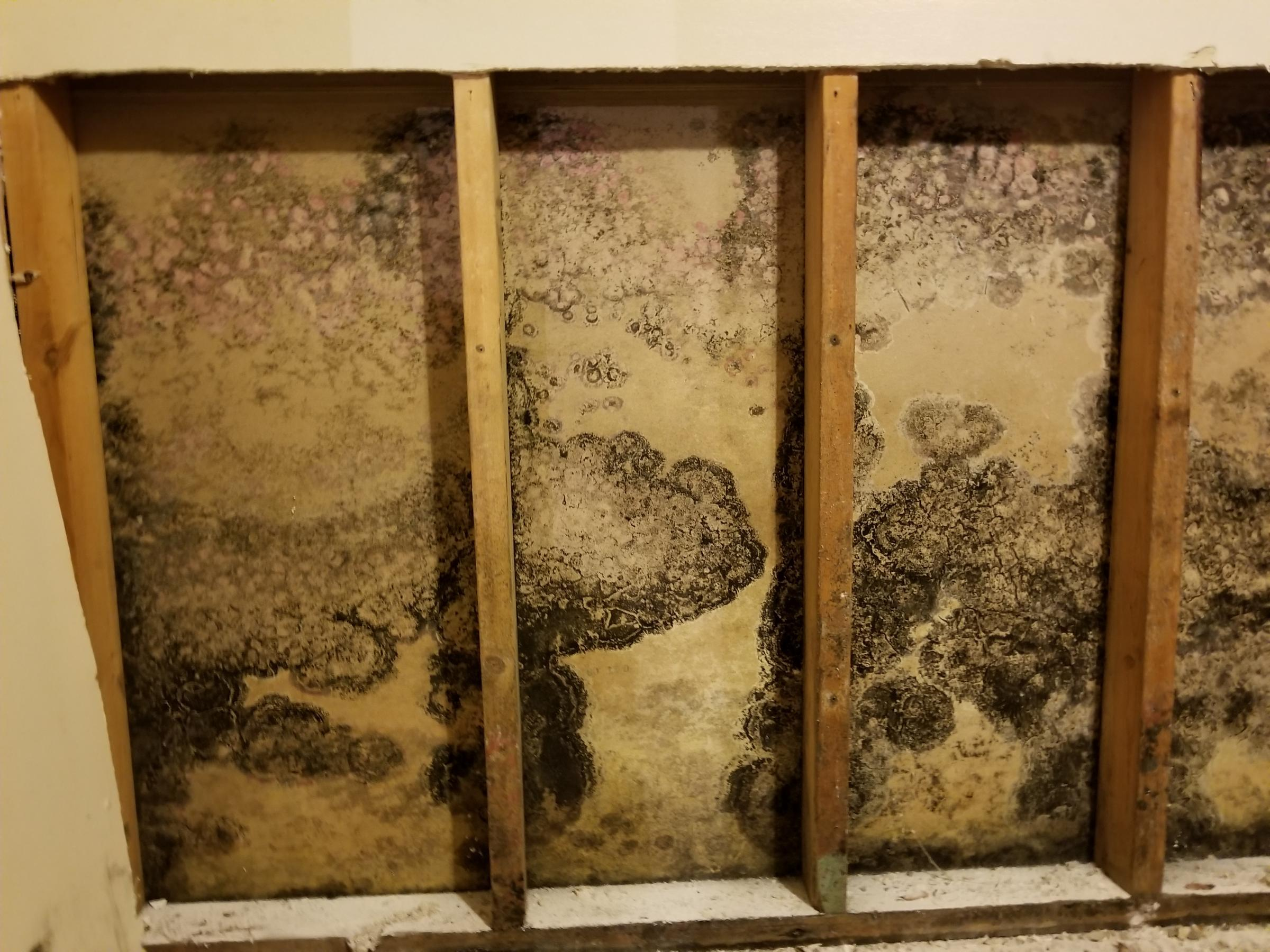 Mold Growing Behind Drywall