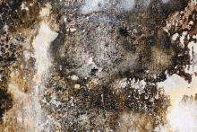 Mold infestation is a serious health threat